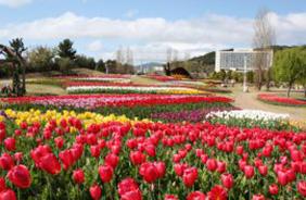 海をのぞむ花と緑、「淡路島 国営明石海峡公園」で春の自然を堪能。(晴天時)