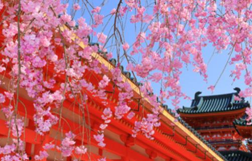 紅しだれ桜と名勝庭園~平安神宮~プレミアムツアー【K-05】